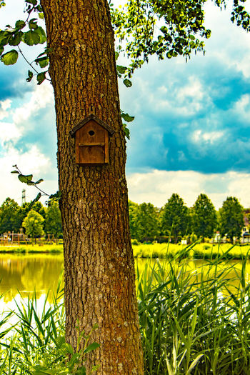 Bird house with beautiful views Bavaria Bird House Beauty In Nature Cloud - Sky Day Field Focus On Foreground Germany Grass Green Color Growth Land Landscape Nature No People Outdoors Plant Sky Tranquility Tree Tree Trunk Trunk Yellow