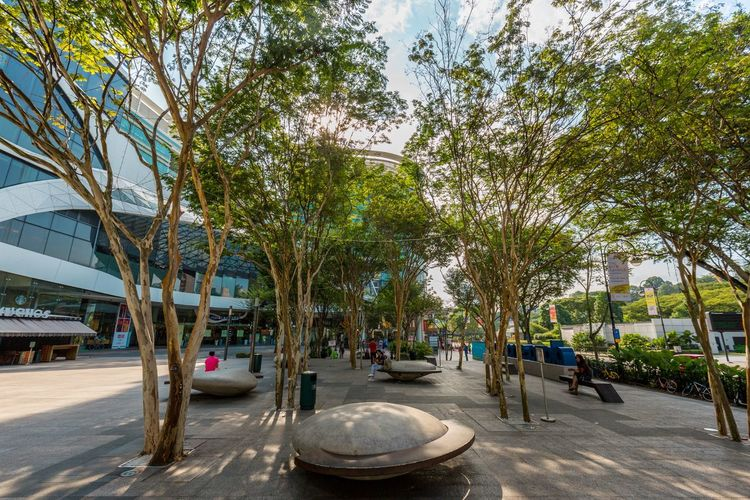 """Trees """"in"""" Concrete Nature Nature In Urban Architecture Building Exterior Built Structure City Day Growth Modern Outdoors Sky Street Tree"""