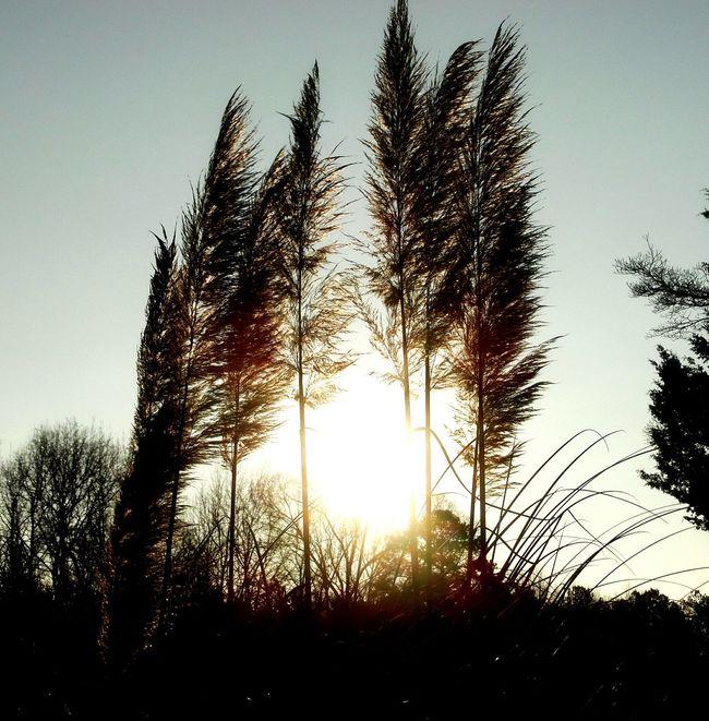 Sunrise_sunsets_aroundworld Sunset #sun #clouds #skylovers #sky #nature #beautifulinnature #naturalbeauty #photography #landscape Sunday Morning
