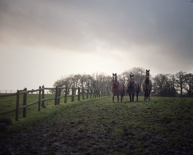 Horses Mud Winter Equestrian Horses Sky Grass Plant Nature Field Lifestyles Fence