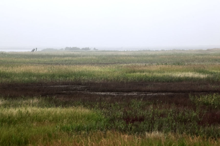 Agriculture Aquatic Grass Beauty In Nature Clear Sky Copy Space Day Farm Field Field Foggy Grass Grassy Green Color Growth Landscape Morning Nature Non-urban Scene Plant Rural Scene Scenics Sky Tranquil Scene Tranquility Wet Land