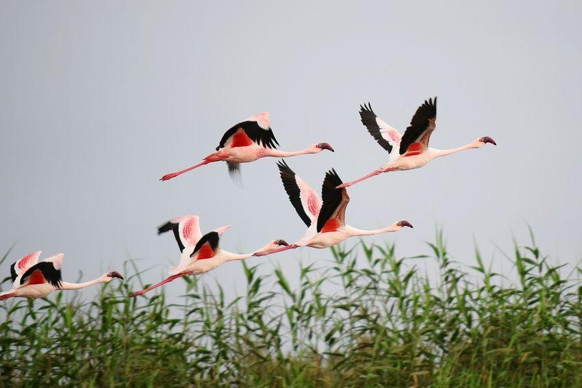 No People Day Nature Outdoors Namibia Animals In The Wild Bird EyeEmNewHere Animal Wildlife Flying High Flamingo