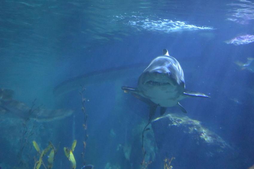 Aquarium Fish Sea Life Sea Life Aquarium Shark Swimming Underwater Wildlife