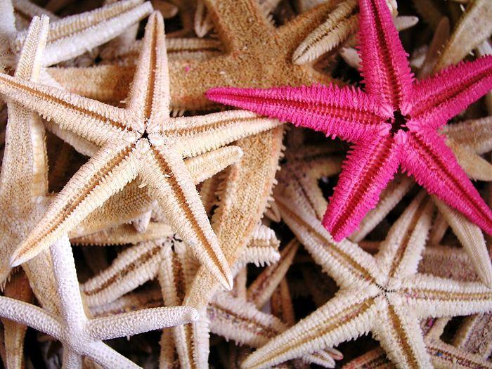 Starfish. Starfish  Star Shape Animal Themes Sea Life Nature Beauty Sea Beauty In Nature Nature Seashell Starfish  Nature Photography Seafood