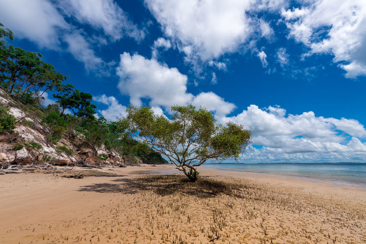 A Tree on the Beach Beach Beauty In Nature Blue Cloud - Sky Day Landscape Nature No People Outdoors Sand Scenics Sea Sky Tranquil Scene Tranquility Tree Water
