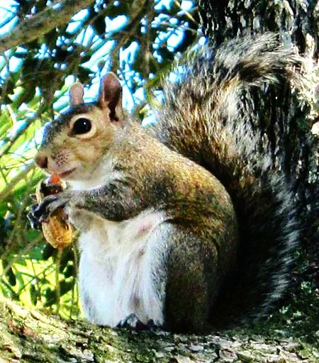 Island Life Taking Photos Chilling Nature Photography Macro Beauty Squirrel Nature Posing My Better Side Natural Beauty Enjoying Life EyeEm Best Shots Ghettyimages