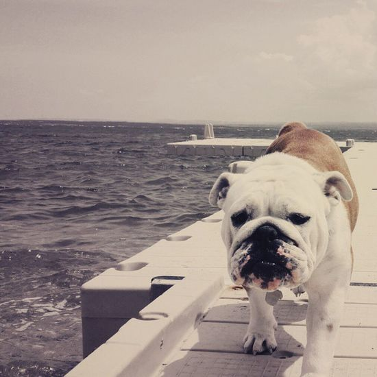 God evening Dog My Life Wonderfull Day