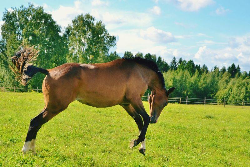 Horse Horses Horse Life Horse Photography  Horse Jumping