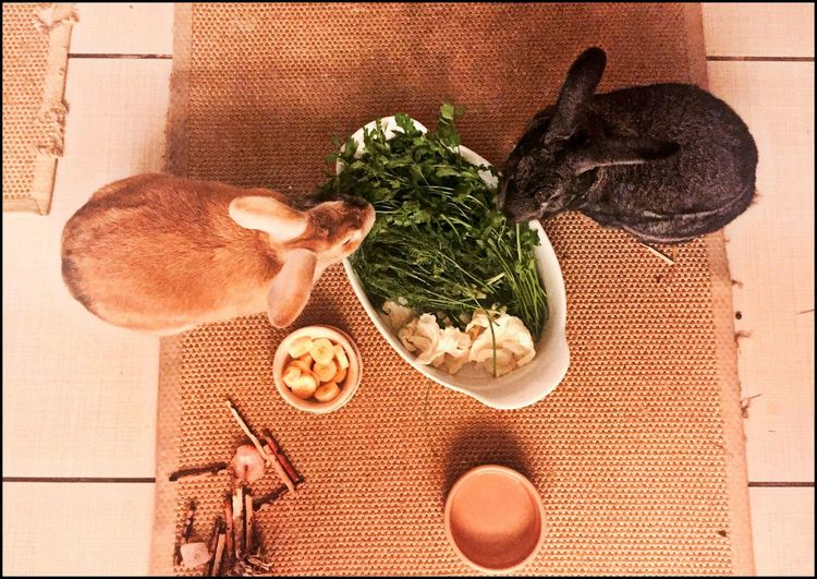 Directly above shot of rabbits eating food at home