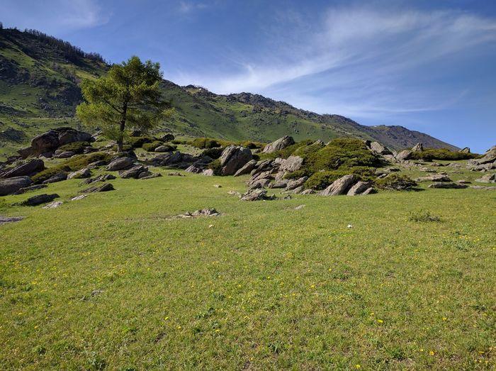 Tree upon grass