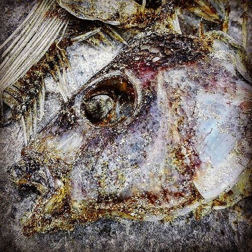 Ando con puras cabezas de pescado Fishhead Fish Fushi