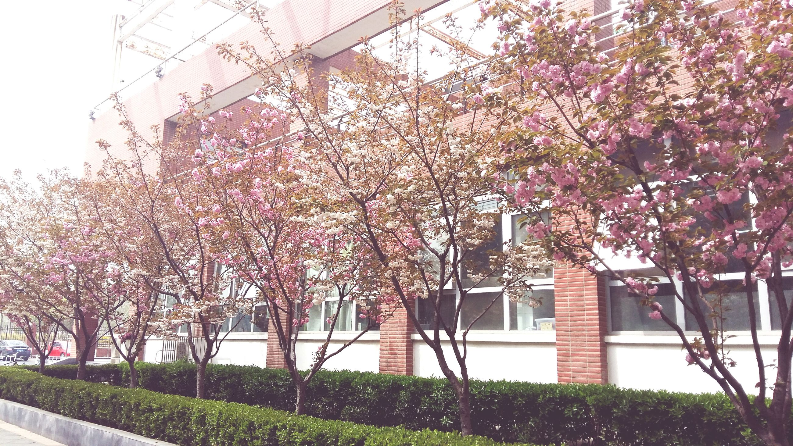 building exterior, flower, built structure, architecture, growth, tree, freshness, branch, house, plant, nature, blossom, low angle view, day, fragility, residential structure, outdoors, window, springtime, residential building