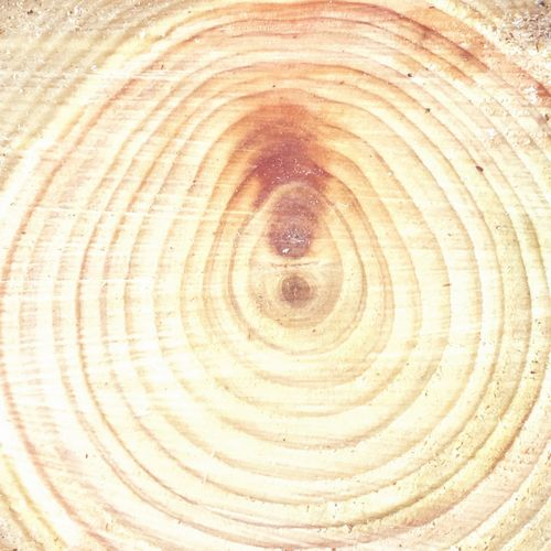 Baum Tree Tree Ring Nature Wood - Material Wood Fresh Good Scent Scent