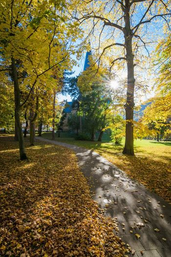 Herbst im Harz Golden October Sachsen-Anhalt Autumn Beauty In Nature Change Fall Forest Germany Harz Leaf Nature Outdoors Park Season  St Petri Thale Tranquility Travel Destinations Tree Yellow