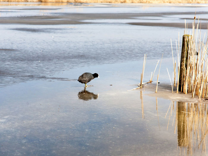 Ice Nature Winter Day Hardwater Holland Holland Scene Moorhen Nature No People Outdoors Water Waver