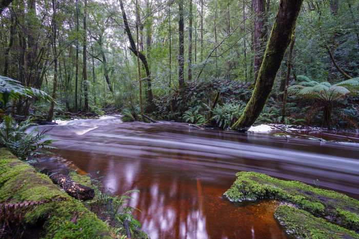 Botanical Creek, Strahan, Tasmania, Australia. River Australia Australian Landscape Long Exposure Creek Tasmania Tasmanian Forest Strahan Tassie Tree Nature Forest Water Beauty In Nature Outdoors Growth Day No People Green Color Scenics Landscape Freshness
