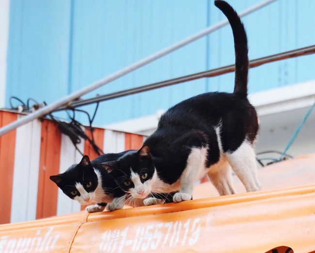 View of two cats in city