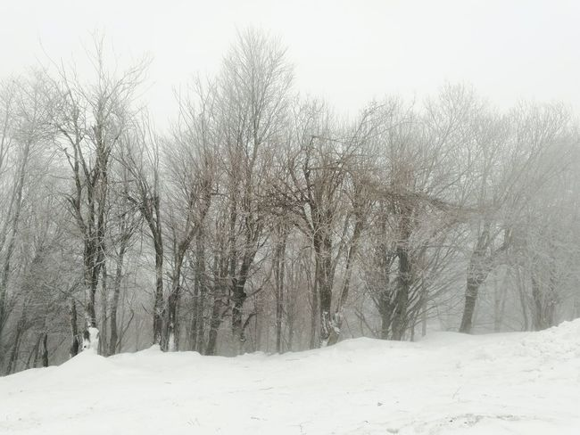 The mountain of Centaurs Winter Tree Snow Cold Temperature Tranquility Outdoors No People Snowing Beauty In Nature Forest
