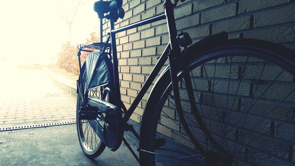 Retro Bike Bicicle Cycling Cycle Cyclists Autumn