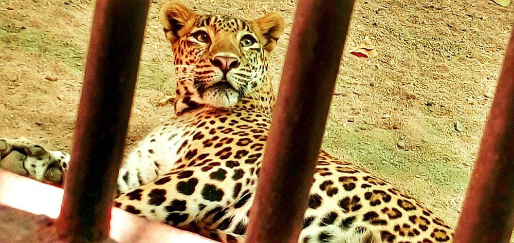 Save Animals First Eyeem Photo