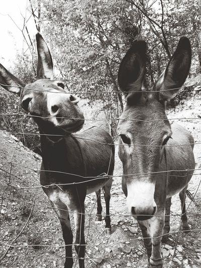 😍😍 Donkey Animals Donkeys Donkey Time Donkey Photography Donkeys. Donkey Love Donkeysfamily Beauty In Nature Mountain Day Tranquility No People Animal Themes Outdoors Animals In The Wild Nature Mammal Tree Close-up Sky Black & White Blackandwhite Black And White Blackandwhite Photography Black And White Photography