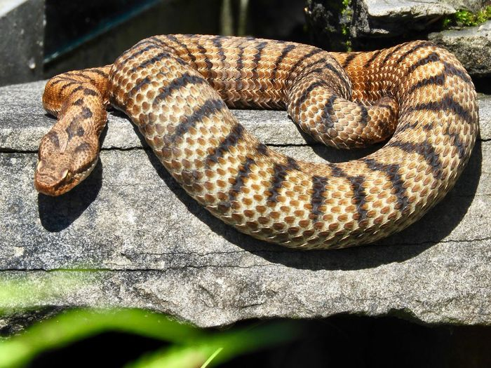 High angle view of snake in zoo