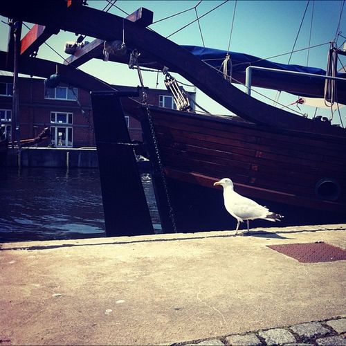 Korrekter Vogel. König Quasi macht den Hafen in Wismar unsicher. IPhoneography Iphone4 Sky Instagood Bird Instagramhub Boat Webstagram Vogel Jj_forum Iphoneonly Gmy Photooftheday 30grad Iphonesia Wismar Instagram Schiff Instamood Bestoftheday Ig Gang_family IPhone Igers Sunset Jj