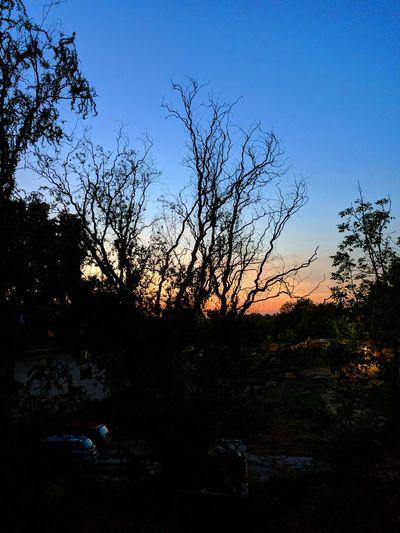 Tree Pixelated Water Sunset Silhouette Clear Sky Bird Sky Landscape