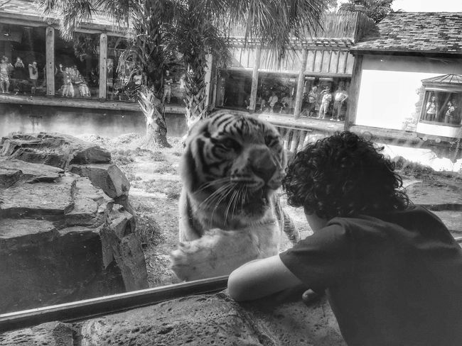 Chance Encounters Animal Themes One Person Feline Real People One Animal Mammal Domestic Animals Pets Day Tiger Human Hand Outdoors Animals In The Wild Tree vacation Vacations EyeEmNewHere Connected By Travel The Traveler - 2018 EyeEm Awards