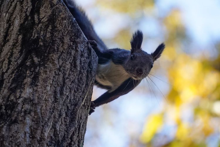 Low angle portrait of squirrel on tree stump