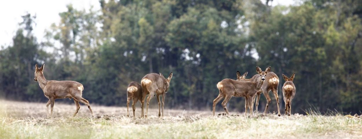 deer Young Animal Beauty In Nature Animals In The Wild Nature_collection