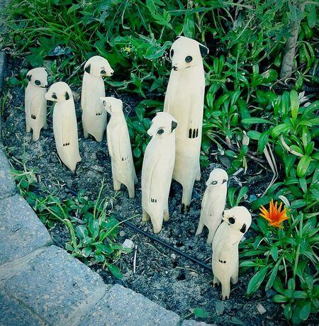 Marmoset Family Streetphotography Wood Art Random Stuff Walkabout