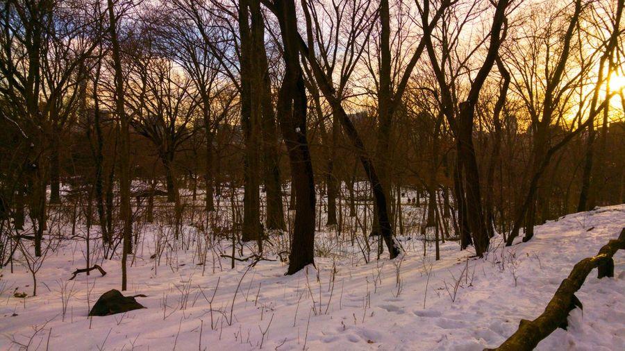 Tree Snow