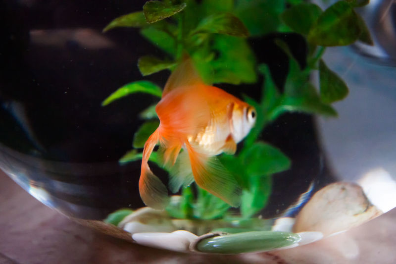 A Canon Fish Glass Gold Green Home Is Where The Art Is In Orange Water
