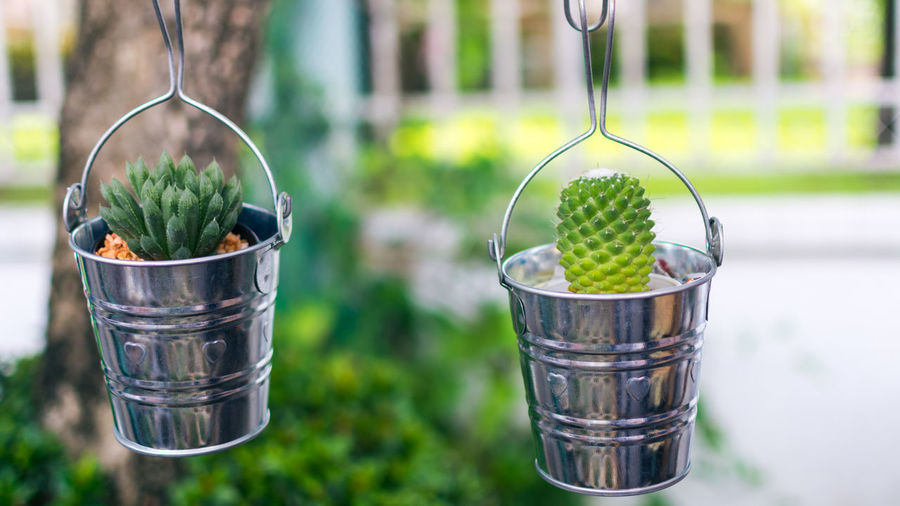 Close-Up Of Succulent Plants In Buckets Hanging Outdoors