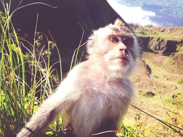 Monkey Selfie Me :)  Supersize Yourself With Whitewall The New Self-Portrait