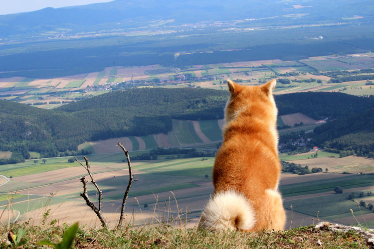 View of a cat looking through landscape