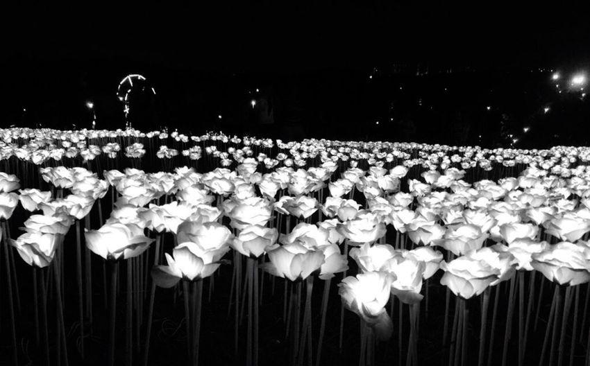 Hello World Taking Photos Beautiful Light Sensation Roses Flower OpenEdit Blackandwhite Electric Light Light And Shadow Freshness Night