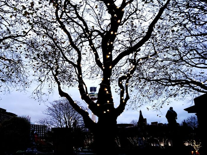 Tree Architecture Outdoors Sky No People Building Exterior City Day St John's Beacon Liverpool Radio City Tower Merseyside