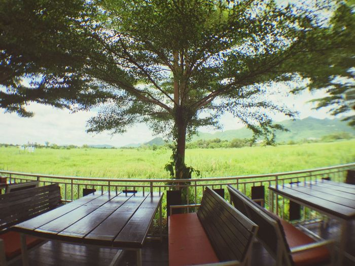 Tree Day Beauty In Nature Grass Mountain View From The Window... POV Outdoors Thailand Relaxing Panoramic