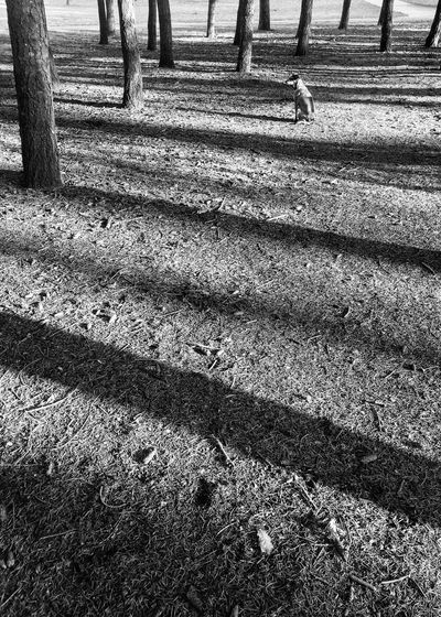 Outdoors Sunlight Day Tree Nature No People Backgrounds Dog Observing Blackandwhite Black And White Shadow Stripes Pattern Striped Park Animal Portrait