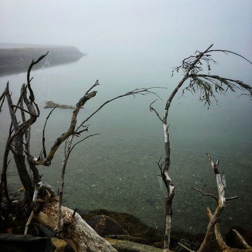 Nature Water No People Outdoors Day Beauty In Nature Lake Landscape Fog Scenics Branch Tranquility Tree Dead Tree Sky