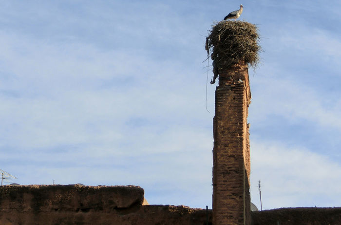 Adapted To The City Animal Themes Beauty In Nature Bird Bird Photography Chimney Chimneys Day Low Angle View Nature No People Old Buildings Old Fireplace Outdoors Sky Smokestack Stack Stork Stork Nest Tranquil Scene