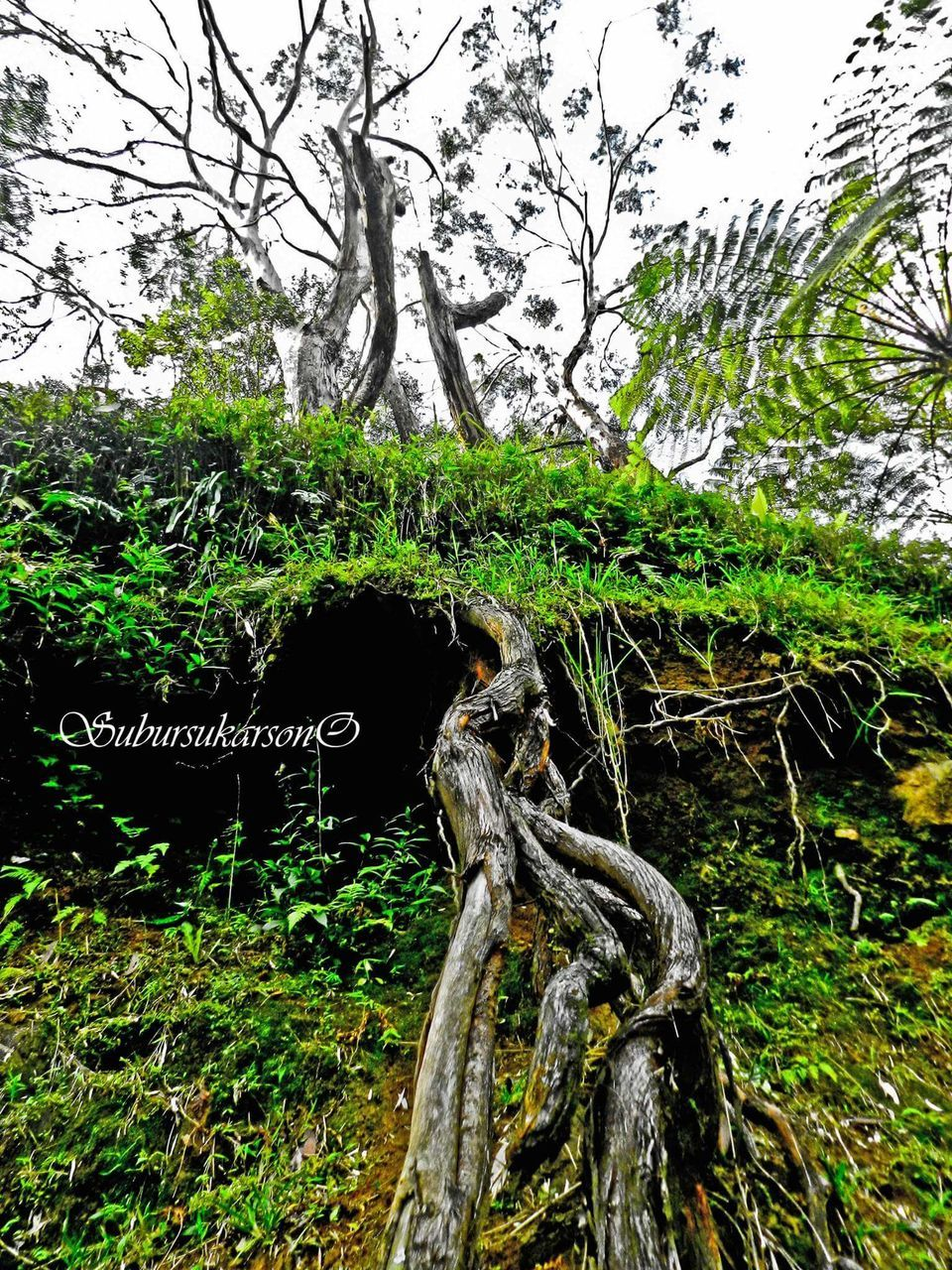 tree, tree trunk, text, growth, nature, no people, branch, day, outdoors, green color, beauty in nature, grass, close-up, dead tree