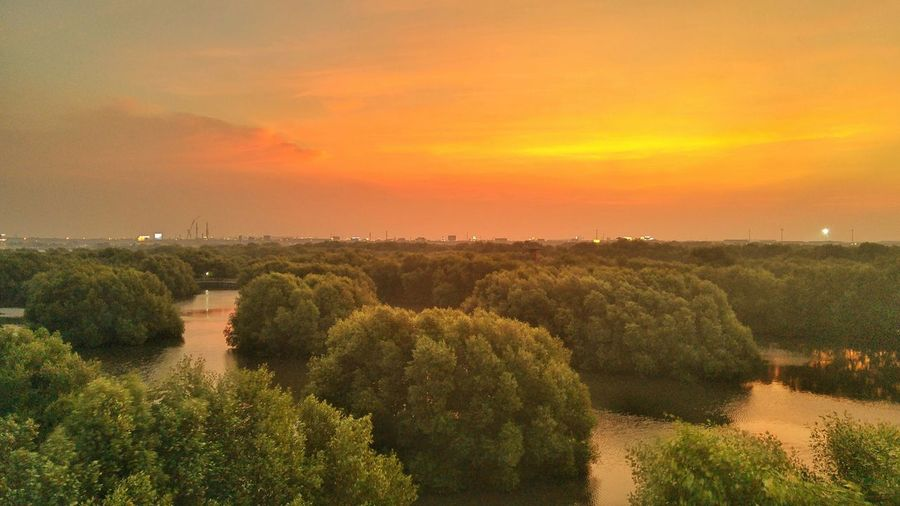 High Angle View Of Trees Growing In Pond Against Sky During Sunset