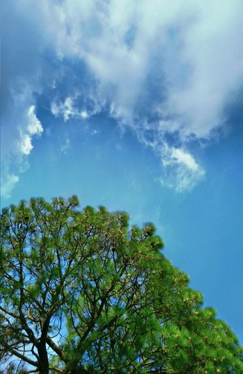 The Great Outdoors - 2017 EyeEm Awards Tree Nature Blue Sky Beauty In Nature Cloud - Sky EyeEmNewHere Magazine Publish Indiapictures Indianphotographer Worldwide_shot Photosfromindia Himachal Pradesh, India Travel Destinations EyeEm Vision Colors
