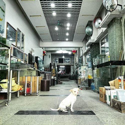 店長. Dog Canton Guangzhou