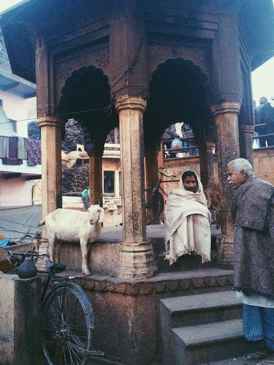 India Varanasi Temple Old Goat