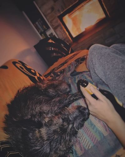 A dog's life 🐶🔥 Dog Dogs Dogs Of EyeEm Dogslife Domestic Animals Home Fireplace Fireplace Time Warmth Warm Colors EyeEm Selects Human Body Part Indoors  One Person Only Women High Angle View People One Woman Only Lifestyles Human Hand Real People Day