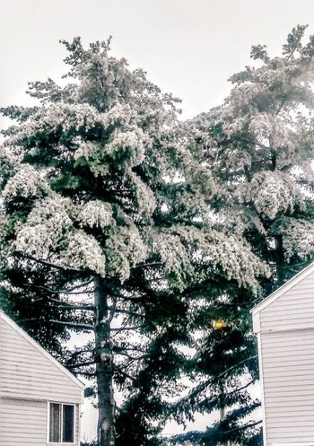 A little weather up north ~ Outdoors Day No People Tree Nature Growth Sky Colors Of Life Cold Temperature Winter Snow My Point Of View Loving The Landscape Ice Storm 2017 In Portland Maine USA Tranquility Beauty In Nature Home Lovethetrees Strength Of Nature